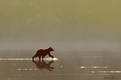 Grizzly Digital Art - Back Lit Grizzly by Aaron Blaise