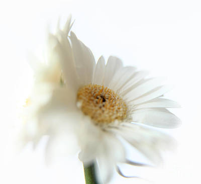 Gerber Daisy Photograph - Back To Back by Eden Baed