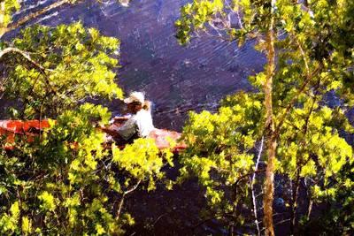 Canoe Mixed Media - Back To Nature by Florene Welebny
