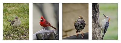 Starlings Photograph - Backyard Bird Series by Heather Applegate