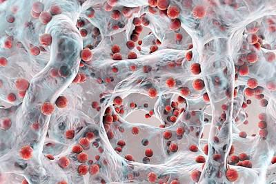 Bacteria In A Biofilm Print by Kateryna Kon