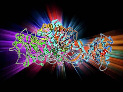 Bacterial Biofilm Enzyme Print by Laguna Design