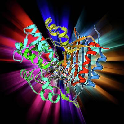 Molecular Structure Photograph - Bacterial Cell Wall Enzyme Molecule by Laguna Design