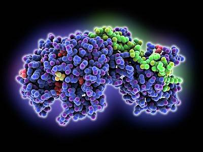 Bacterial Penicillin-binding Protein Print by Laguna Design