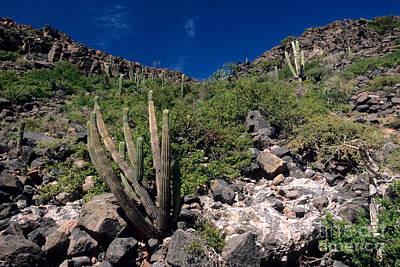Baja Landscape Print by William H. Mullins