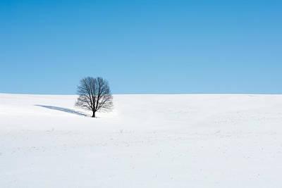 Winter Trees Photograph - Balance by Todd Klassy