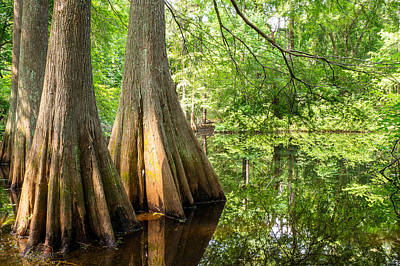Bald Cypress In Summer Green - Texas Print by Ellie Teramoto