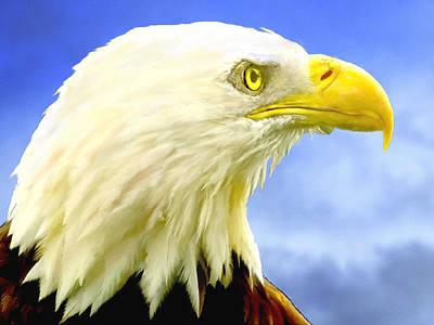 Bald Eagle Painting For Sale Original by Bob and Nadine Johnston