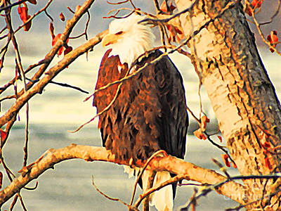 Eagle Digital Art - Bald Eagle Perched by Flo Karp