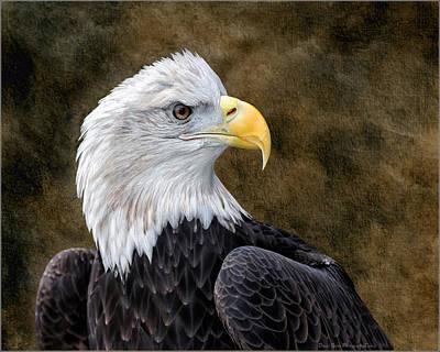 Raptors Photograph - Bald Eagle Portrait by Daniel Behm