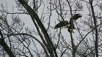Travel Photograph - Bald Eagle Taking Flight by Jason Humbracht