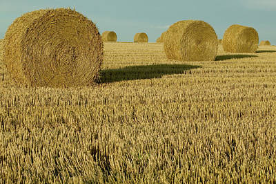 Bales Of Grain At Harvest Time Print by Cyril Ruoso