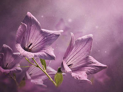 Balloon Flowers Print by Ann Lauwers