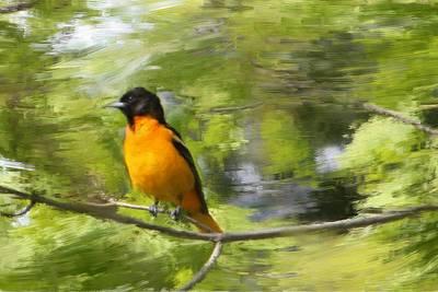 Oriole Digital Art - Baltimore Orioles Daydream  by Nancy TeWinkel Lauren