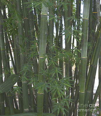 Bamboo 3 Print by To-Tam Gerwe
