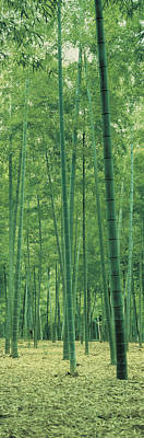 Forest Floor Photograph - Bamboo Forest Nagaokakyo Kyoto Japan by Panoramic Images