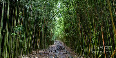 Bamboo Photograph - Bamboo Forest Trail Hana Maui by Dustin K Ryan