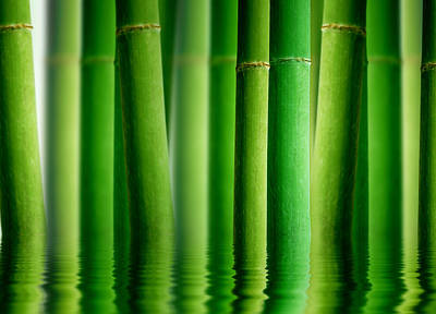 Bamboo Forest With Water Reflection Print by Aged Pixel