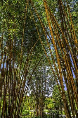 Bamboo Print by Mario Legaspi