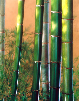 Urban Trees Photograph - Bamboo Sticks by Panoramic Images