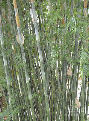 Bamboo Print by To-Tam Gerwe