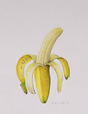 Food And Beverage Drawing - Banana by Alison Cooper