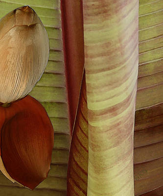 Earthtone Colored Art Photograph - Banana Composition II by Ben and Raisa Gertsberg