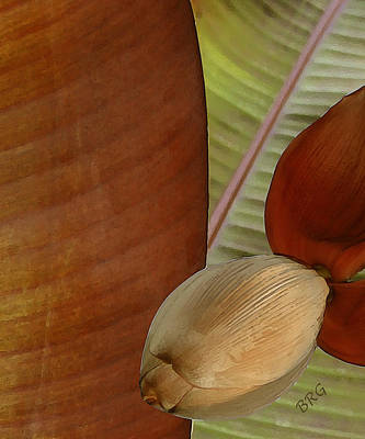 Earthtone Colored Art Photograph - Banana Composition IIi by Ben and Raisa Gertsberg