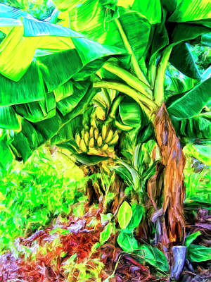 Haleiwa Painting - Bananas In Lahaina Maui by Dominic Piperata