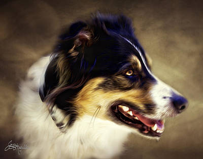 Dogs Photograph - Bandit Color by Jacque The Muse Photography