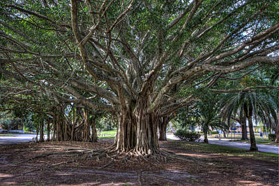Banyan Tree Photograph - Banyan Tree Reaching For The Sky by Gerald Adams