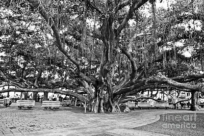 Town Square Photograph - Banyan Tree by Scott Pellegrin