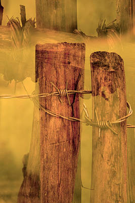Barbed Wire  Original by Toppart Sweden