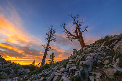 Tree Photograph - Bare  by Dustin  LeFevre