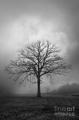 Bare Tree And Clouds Bw Print by Dave Gordon