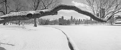 Bare Trees In A Park, Lincoln Park Print by Panoramic Images