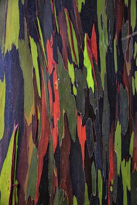 Bark Of The Rainbow Eucalyptus Print by Scott Mead