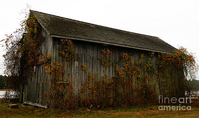 Red Fallen Leave Photograph - Barn 2 by Andrea Anderegg