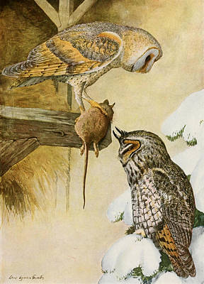 Barn And Long Eared Owls Print by Louis Agassiz Fuertes