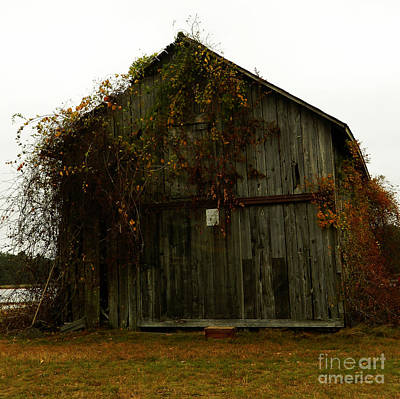Red Fallen Leave Photograph - Barn by Andrea Anderegg