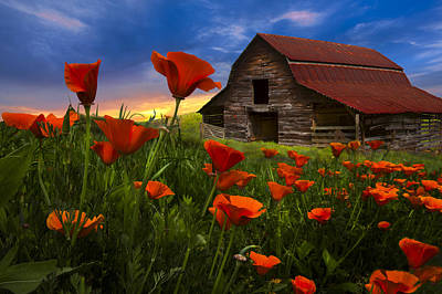 Prairie Photograph - Barn In Poppies by Debra and Dave Vanderlaan