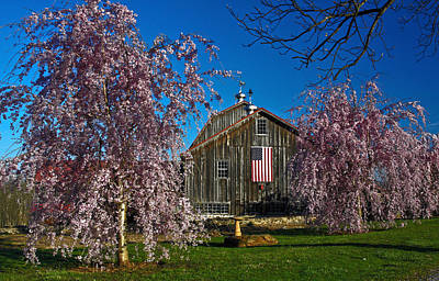 Barn In Spring Print by Sally Weigand