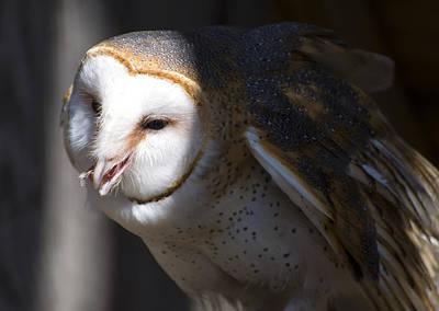 Barn Owl 1 Print by Chris Flees