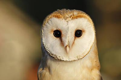 Barn Owl Beauty Print by Roeselien Raimond
