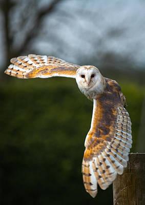 Owl Photograph - Barn Owl In Flight by Shaun Wilkinson