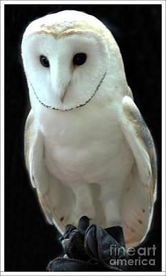 Barn Owl. Print by Kathleen Struckle