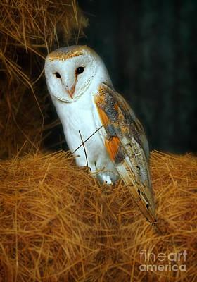 Barn Owl Print by Louise Heusinkveld