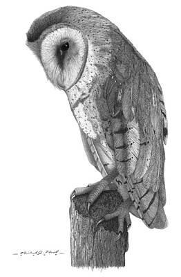 Barn Owl Original by Michael Kreizel