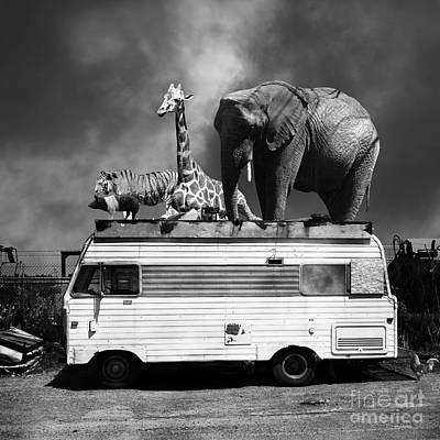 Barnum And Bailey Goes On A Road Trip 5d22705 Square Black And White Print by Wingsdomain Art and Photography