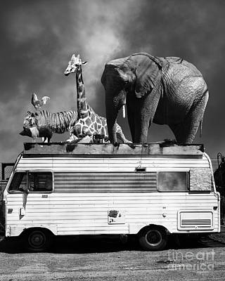 Barnum And Bailey Goes On A Road Trip 5d22705 Vertical Black And White Print by Wingsdomain Art and Photography